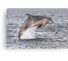 Moray Firth Dolphin Canvas Print
