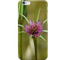Dandelion in bloom iPhone Case/Skin