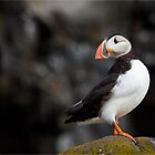 Atlantic Puffin by cjdolfin