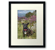 The Tired Terrier Framed Print