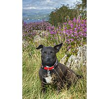 The Tired Terrier Photographic Print