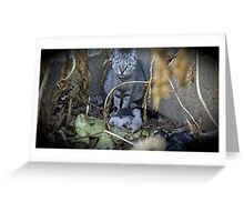 Kittens and Mom Greeting Card