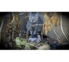 Kittens and Mom Photographic Print