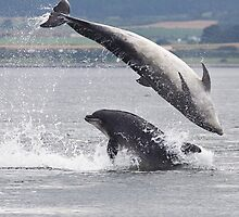 Two Bottlenose Dolphins Jumping by cjdolfin