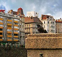 Pigeon by Beatrix M Varga