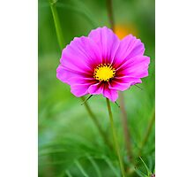 Two Tone Cosmo Photographic Print