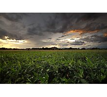 Storm Greens Photographic Print