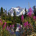 fireweed, picture lake, and mt shuksan, washington usa by dedmanshootn