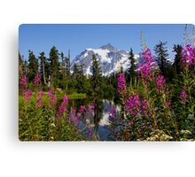 fireweed, picture lake, and mt shuksan, washington usa Canvas Print