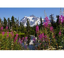 fireweed, picture lake, and mt shuksan, washington usa Photographic Print