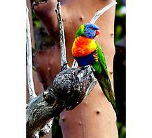 Parakeet #1 Photographic Print