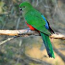 Female King Parrot. Cedar Creek, Qld,  Australia. by Ralph de Zilva