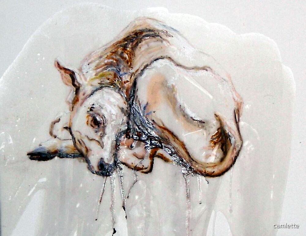 New Born Calf by Cameron Hampton