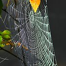 Autumn Web by NatureGreeting Cards ©ccwri