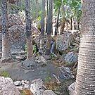 Walk to Zebedee Springs,  Kimberley, Western Australia by Margaret  Hyde