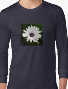 Beautiful Osteospermum White Daisy With Purple Center  Long Sleeve T-Shirt