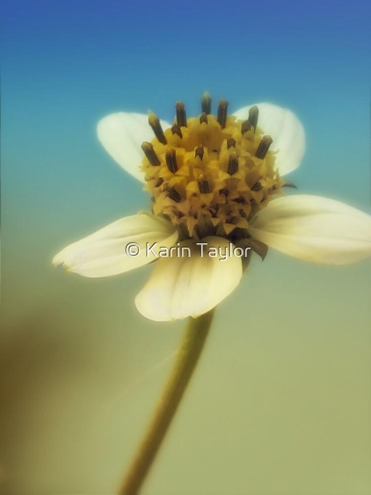 sweet sunshine by © Karin Taylor