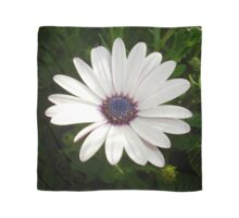 Beautiful Osteospermum White Daisy With Purple Center  Scarf