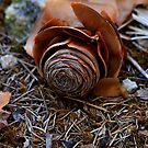Fallen needles and cone by R-Summers