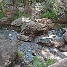 Zebedee Springs, El Questro Wilderness Park, Kimberley, W.A. by Margaret  Hyde