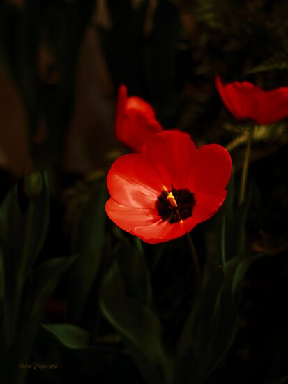 Red Tulip by Elaine Teague