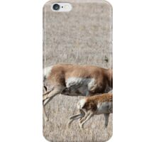 Pronghorn Buck And Fawn iPhone Case/Skin