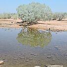 Pentacost River, Kimberley, Western Australia by Margaret  Hyde