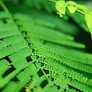 Minimalism in Fern Leaves by -aimslo-