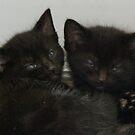 Twin Tabby Kittens by AnnDixon