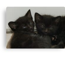Twin Tabby Kittens Canvas Print