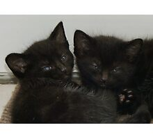 Twin Tabby Kittens Photographic Print