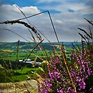View from Otley Chevin #1 by Colin Metcalf