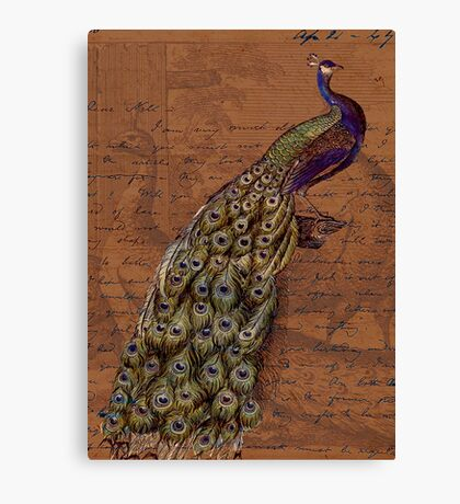 Glory of the Peacock #1 Canvas Print