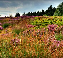 Otley Chevin Heathland by Colin Metcalf