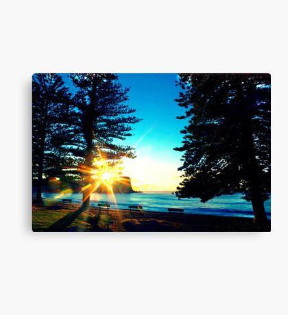 Sunrise between the Pine Trees Canvas Print
