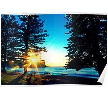 Sunrise between the Pine Trees Poster