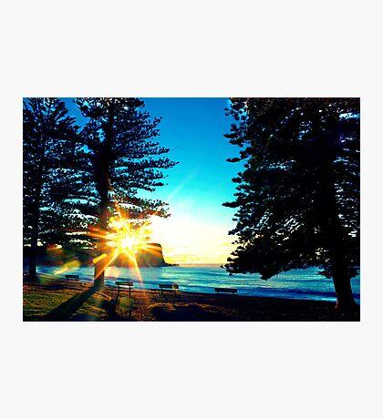 Sunrise between the Pine Trees Photographic Print