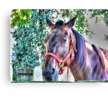 Farm Horse Canvas Print