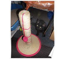 Kitten with scratching post/ball -(220812)- Digital photo Poster