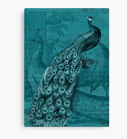 Glory of the Peacock #2 Canvas Print