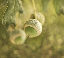 acorns by Ingz
