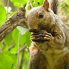 Nibble, Nibble Like A Mouse by lorilee