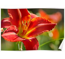 Daylily Garden Poster