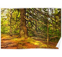 Jessup's Path, Acadia National Park, Maine Poster