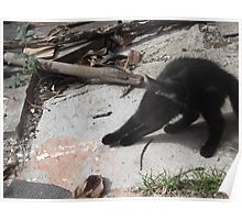 Kitten having a really good stretch -(220812)- Digital photo Poster