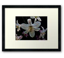 Washington Lilly Framed Print