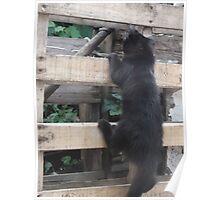 Kitten, climbing up fence -(220812)- Digital photo Poster