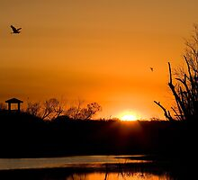 Sunrise at Brazos Bend by Paul Wolf