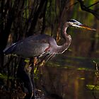 Great Blue Heron (Ardea herodias) by Paul Wolf