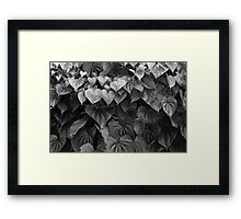 Monochrome Leafiness Framed Print